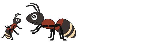 蟻を飼う~ムネアカオオアリ飼育ブログ