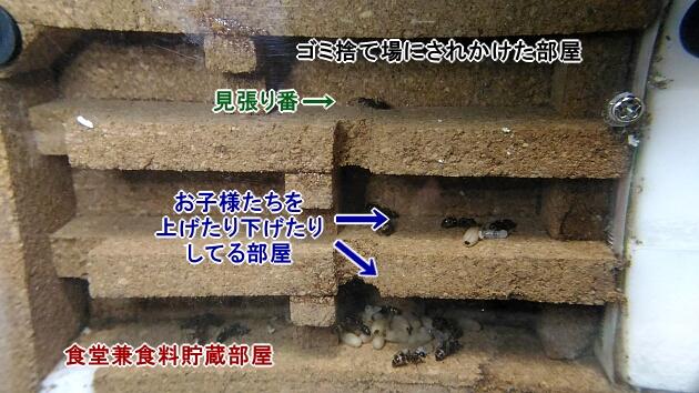ゴミ捨て場問題の結末と部屋の使い分け