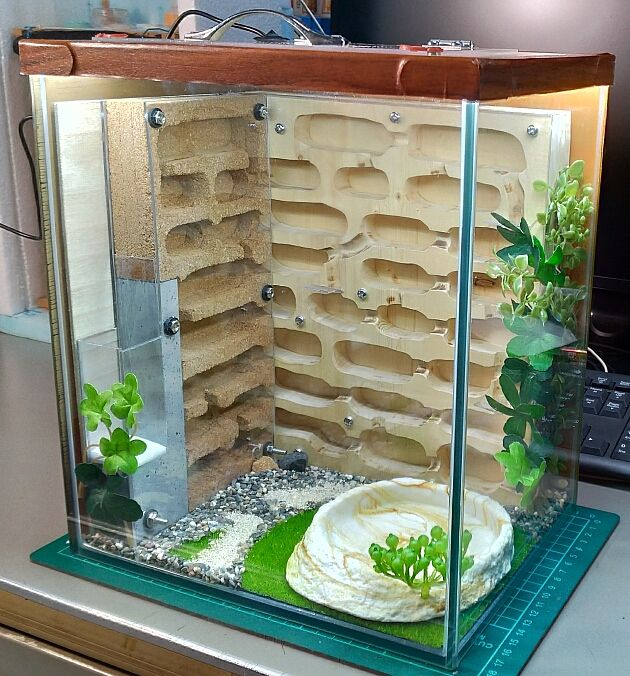 自作アリ飼育ケース wood,cork,plaster DIY Formicarium
